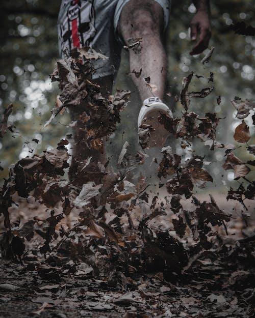 alan derinliği, bitki örtüsü, bokeh, bulanıklık içeren Ücretsiz stok fotoğraf