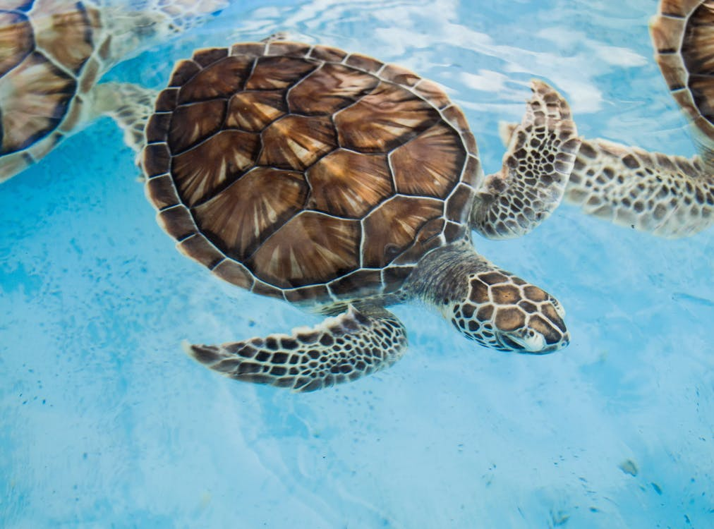 stop pollution in the oceans to save turtles for sustainable development