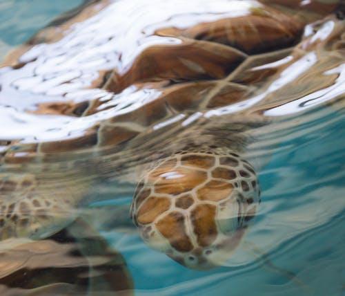 Ilmainen kuvapankkikuva tunnisteilla aallonmurtaja, kilpikonna, merikilpikonna, sininen vesi