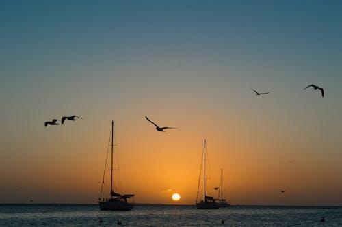 Ilmainen kuvapankkikuva tunnisteilla appelsiini, auringonlasku, Linnut, meri