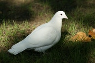 bird, freedom, religion