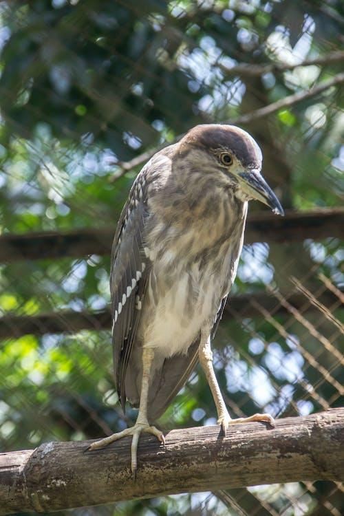 Gratis lagerfoto af dyr, dyrefotografering, dyreriget, fugl