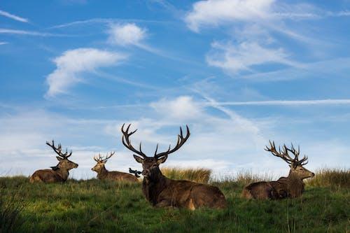 一群動物, 哺乳動物, 草, 野生動物 的 免费素材照片