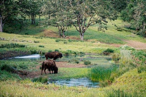 강, 야외에서, 잔디, 초원의 무료 스톡 사진