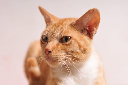 Free stock photo of animal, animals, cats, indoor