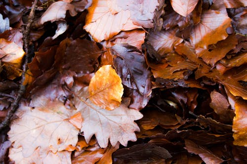 Fotos de stock gratuitas de al aire libre, dorado, marrón, naturaleza