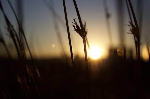 Gratis arkivbilde med sol, soloppgang, tørt gress