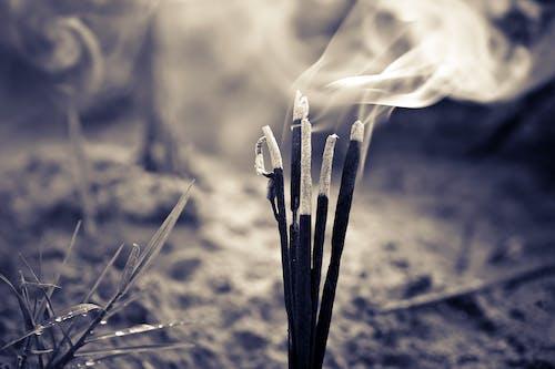 Imagine de stoc gratuită din alb-negru, ardere, arid, ars