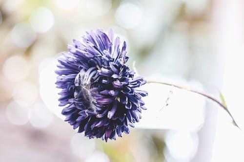 Immagine gratuita di bel fiore, bellezza nella natura, fiore, fiore blu