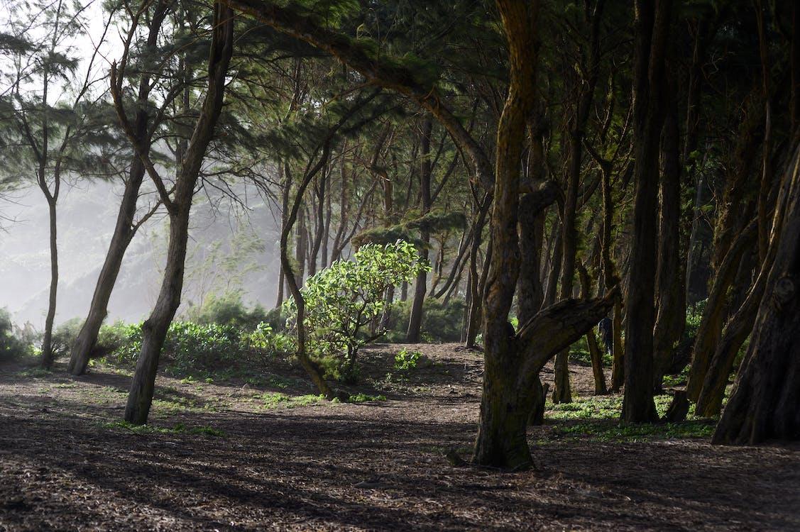 bình Minh, cây, cuộc phiêu lưu