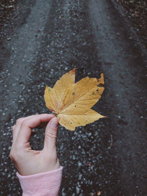 Foto profissional grátis de declínio, folha, holding, mão