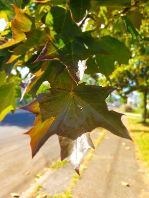 Δωρεάν στοκ φωτογραφιών με δέντρο, δύση του ηλίου, φθινόπωρο, φύλλα