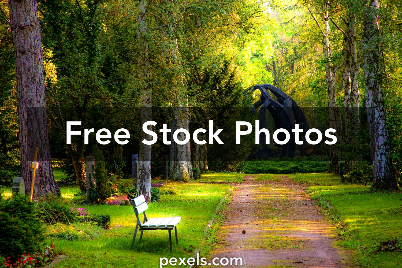 1000+ Interesting Garden Photos Pexels · Free Stock Photos