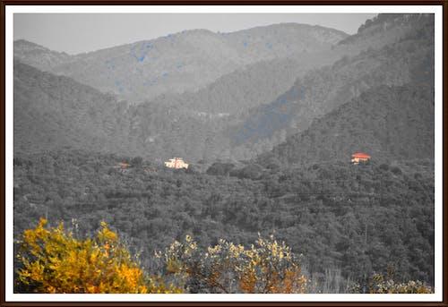 Kostnadsfri bild av landsbygdens natur