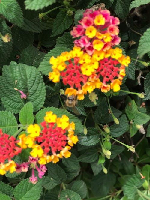 Immagine gratuita di ape, fioritura, foglia, foglia di fiore