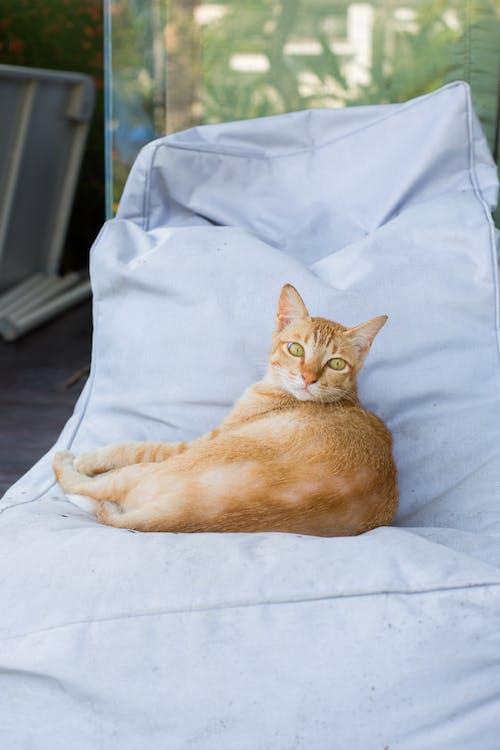 Foto profissional grátis de animal, animal de estimação, bonitinho, felino