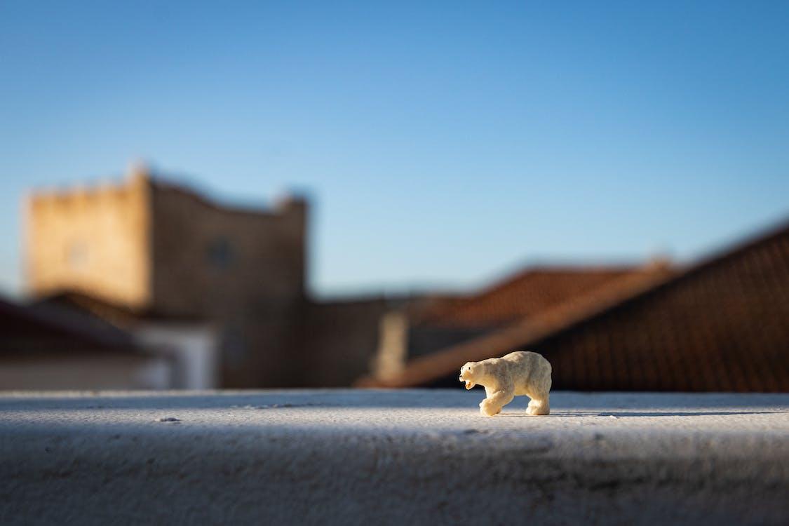 Polar Bear Miniature Toy in Selective Focus Photography