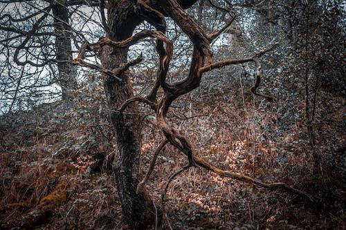 Δωρεάν στοκ φωτογραφιών με άγριος, δασικός, δέντρα, Εξωτερικός χώρος