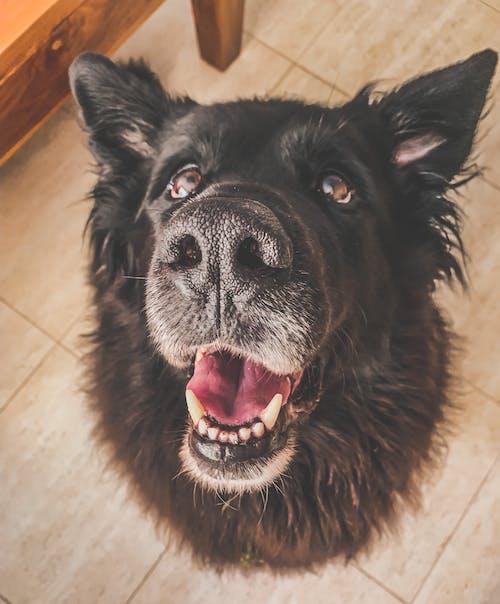 Kostnadsfri bild av djur, hund, hund-, husdjur