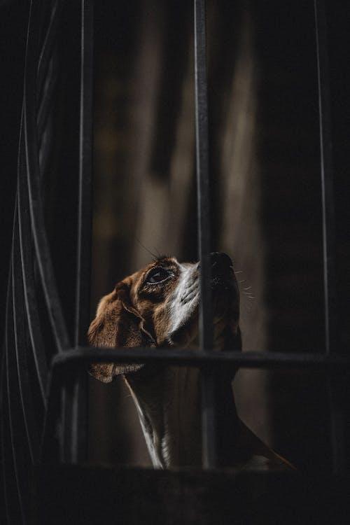 Fotobanka sbezplatnými fotkami na tému čistokrvný, detailný záber, domáce zviera, hĺbka ostrosti