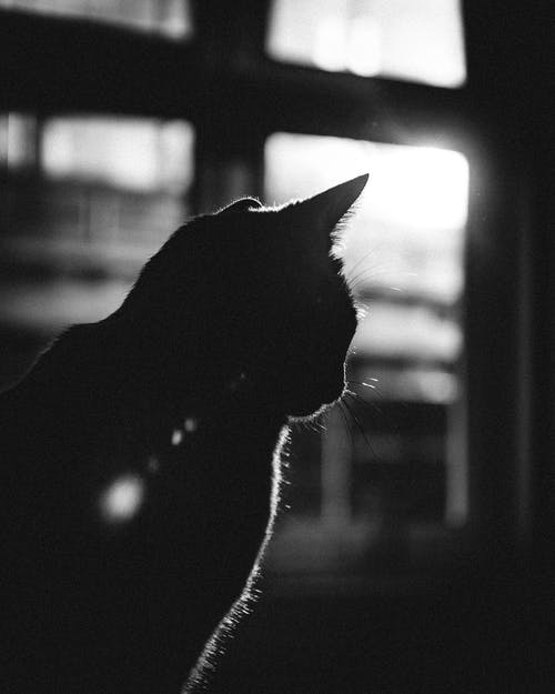 Grayscale Photo of a Cat