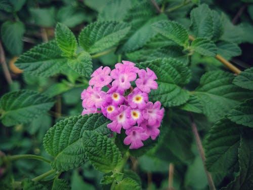 Kostenloses Stock Foto zu blume, schöne blumen, waldblume