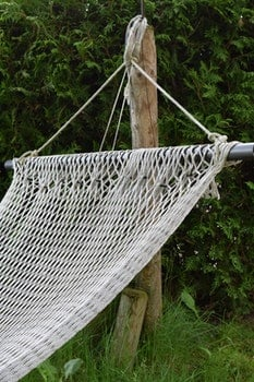 Clothes Hanging on Grass Against Trees