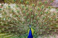 bird, pattern, feathers