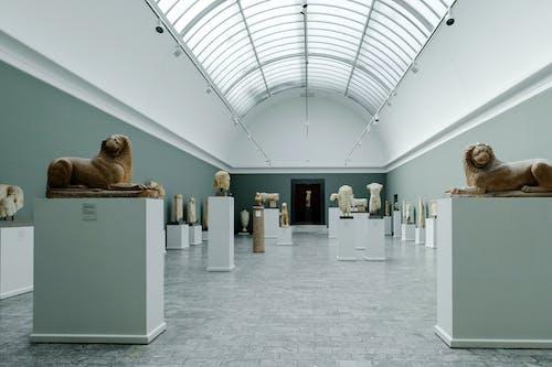 Darmowe zdjęcie z galerii z architektura, dania, eksponować, galeria sztuki