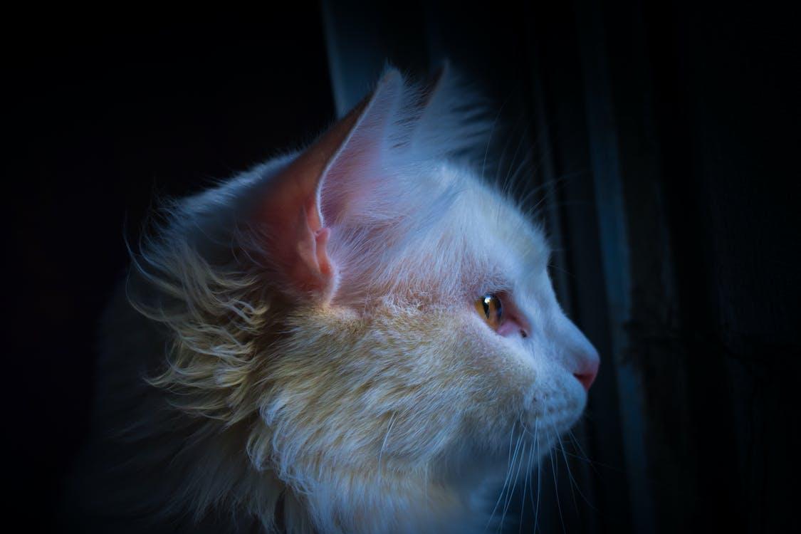животное, кошачьи, кошка