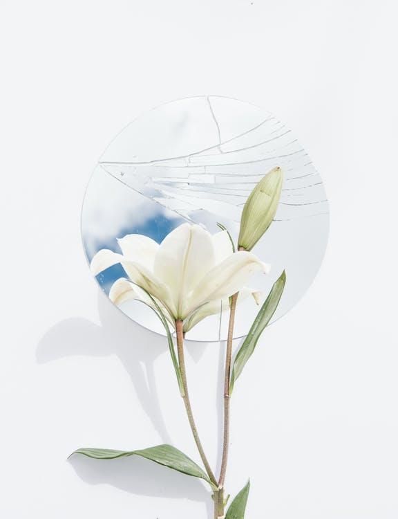 kasvikunta, kukinta, kukka