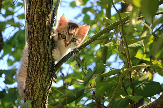 Low Angle View of Cat on Tree