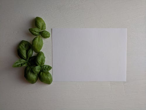 White Printer Paper Besides Green Leaves