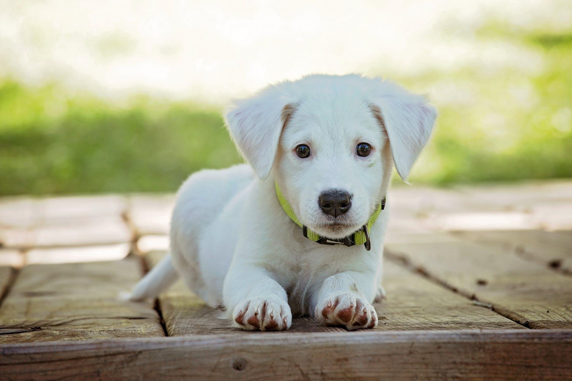Enseigner à votre chien: voici comment vous pouvez le faire asseoir ou rester!