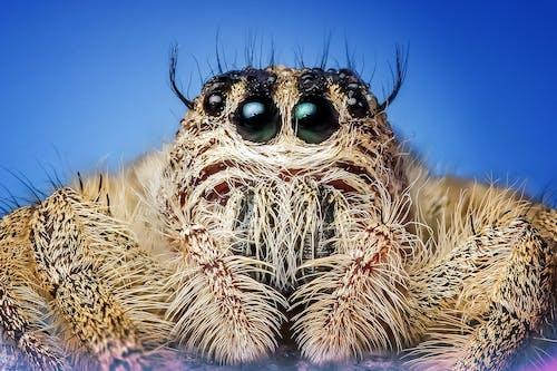 거미, 거미류, 곤충, 귀여운의 무료 스톡 사진