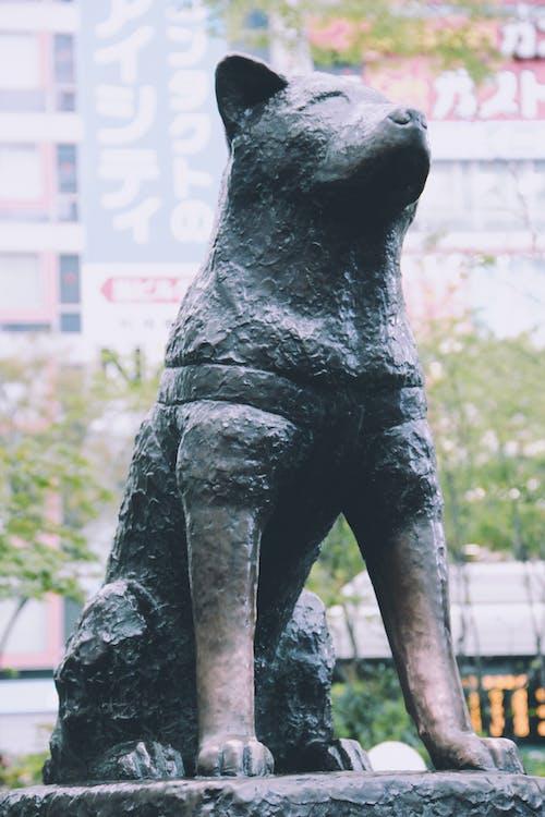 Základová fotografie zdarma na téma akita, bez hnutí, bronz
