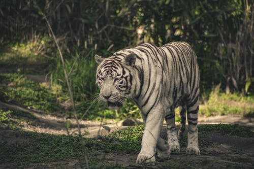 Immagine gratuita di animale, animale selvatico, fauna selvatica, fotografia di animali