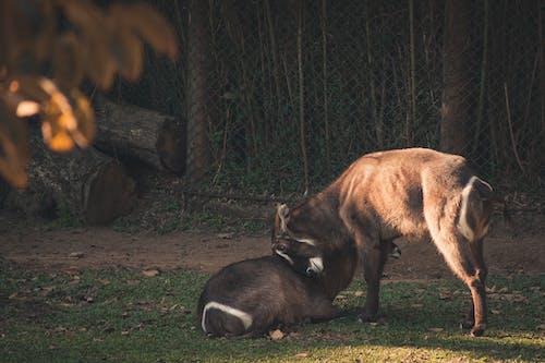 Foto profissional grátis de animal, ao ar livre, bebê, castanho