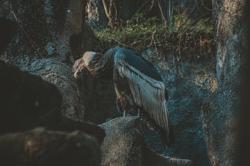 Photo Of Vulture Perched On Top Of The Rock
