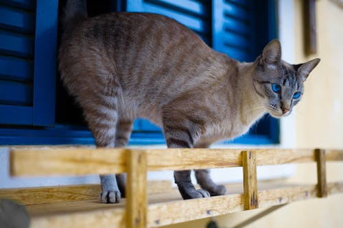 Photo Of Cat Standing Near Blue Window