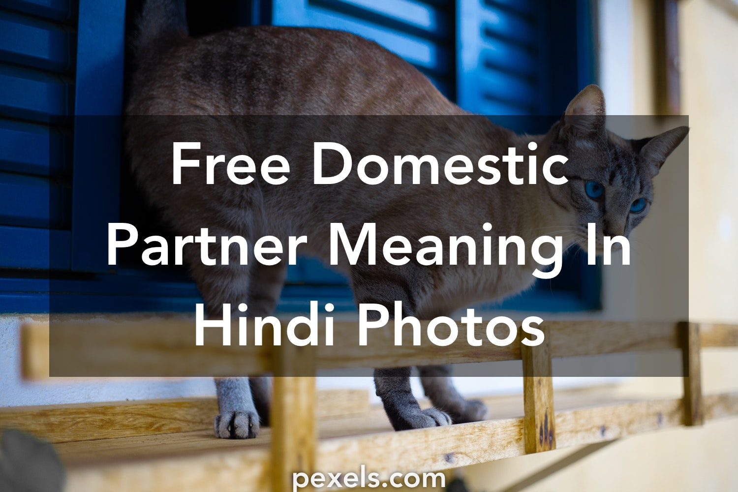 1000+ Amazing Domestic Partner Meaning In Hindi Photos