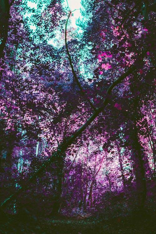 Immagine gratuita di alberi, colore, effetto, foglie