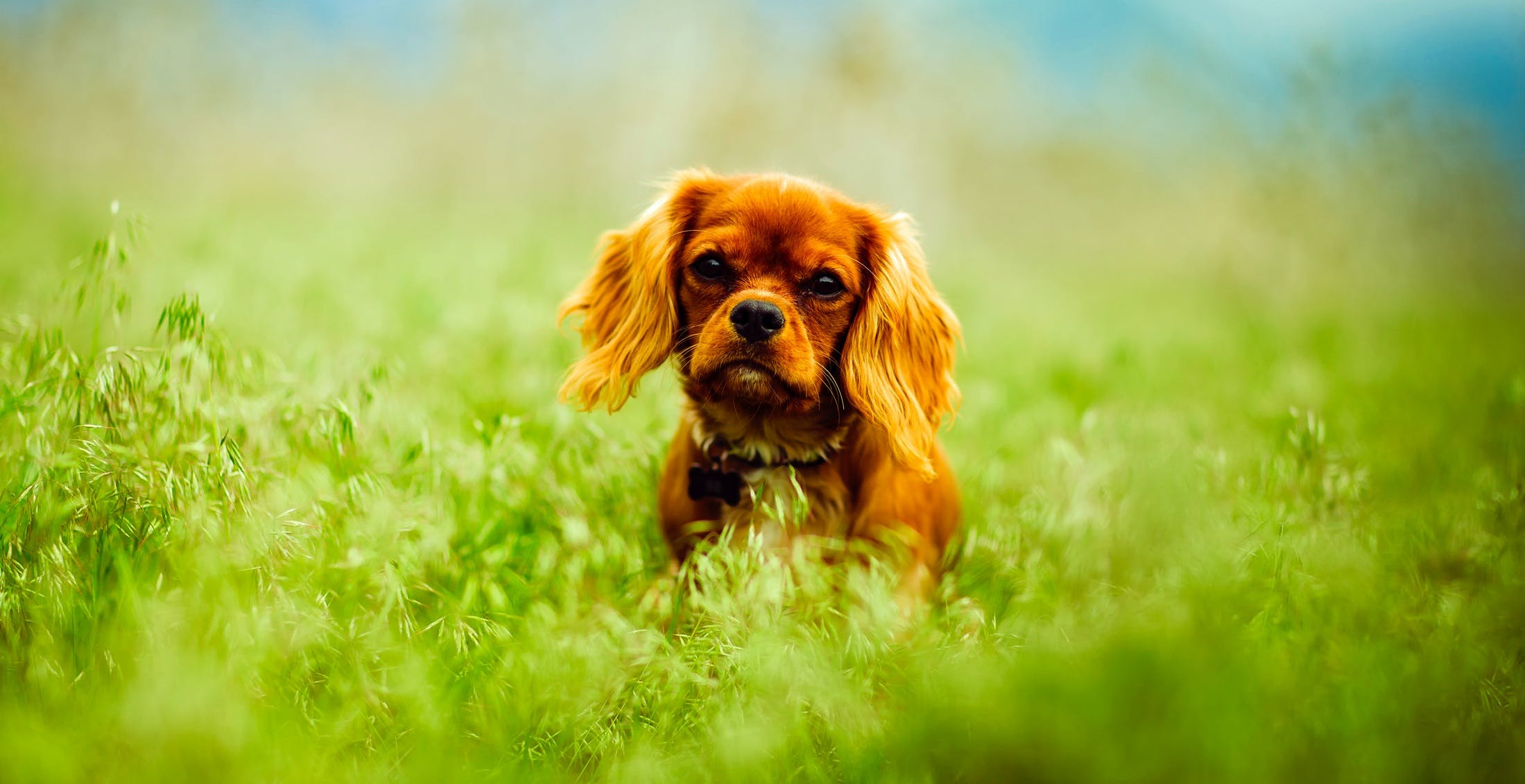 Dog on Grass