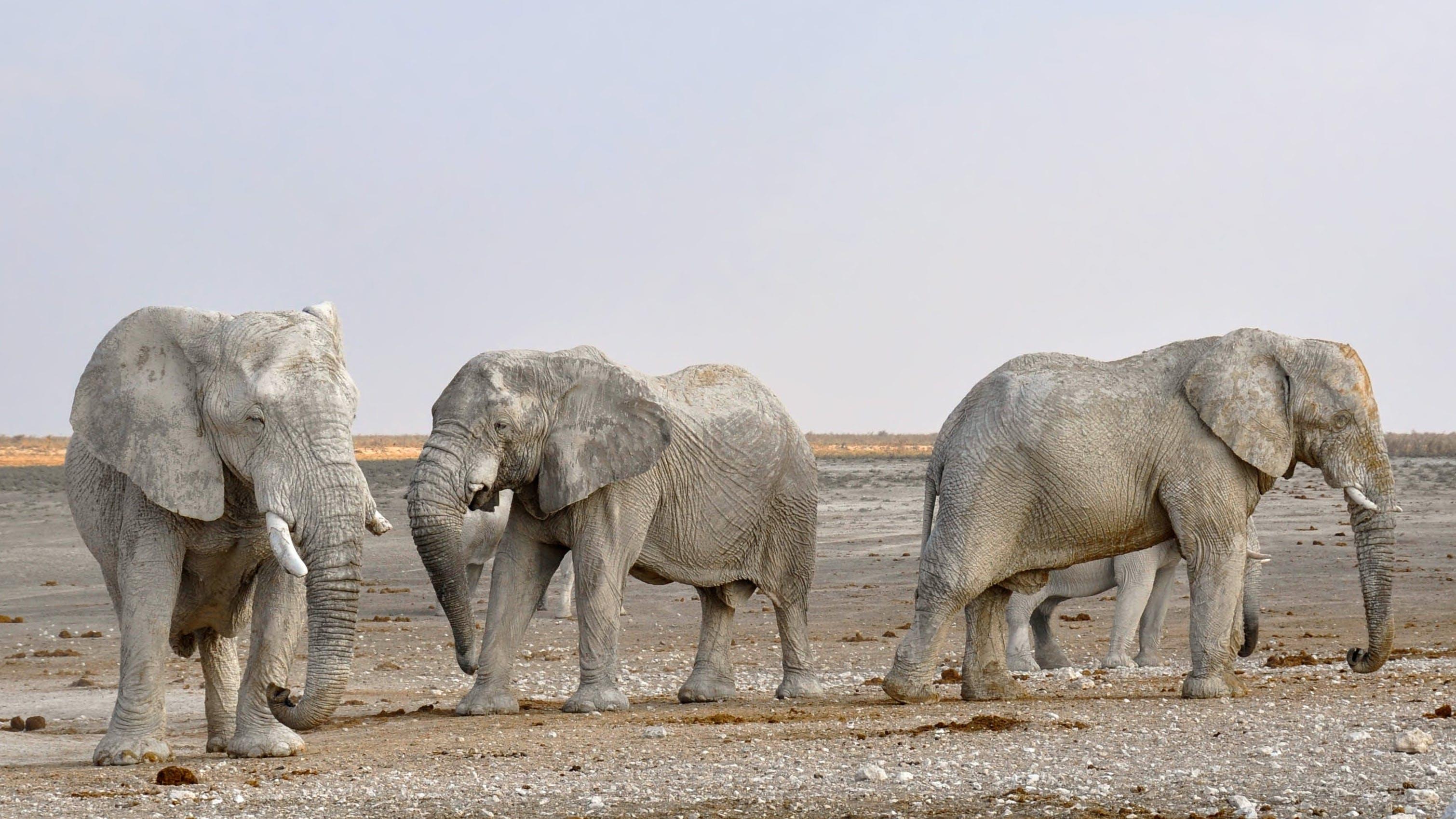 Kostenloses Stock Foto zu afrika, baumstamm, draußen, elefanten
