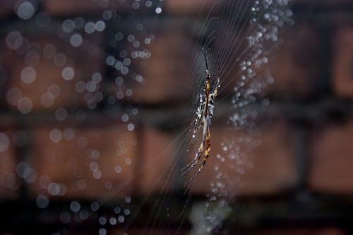 Δωρεάν στοκ φωτογραφιών με αράχνη, βροχή, ζωικό βασίλειο, ζώο
