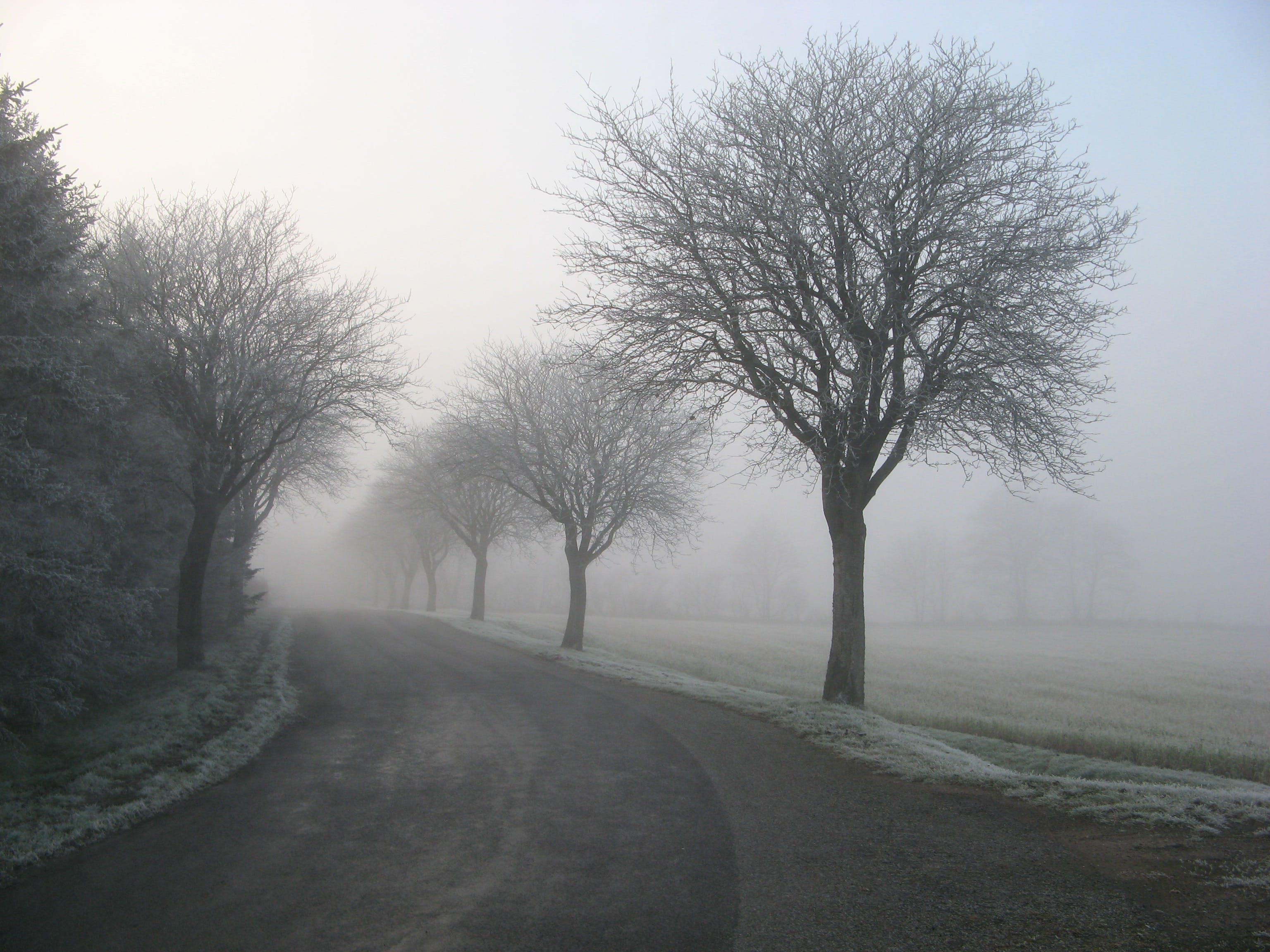 Imagine de stoc gratuită din arbori, câmp, cețos, drum