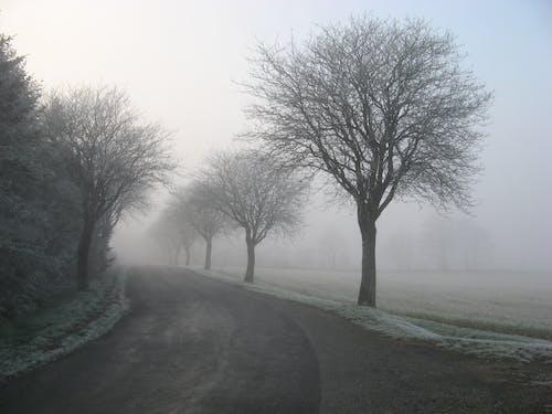 Gratis lagerfoto af bane, forkølelse, græs, landskab