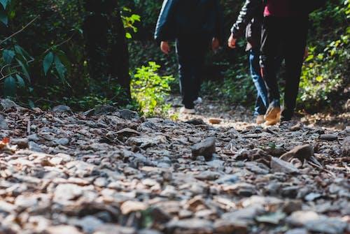 Fotos de stock gratuitas de al aire libre, bosque, caminando, caminar