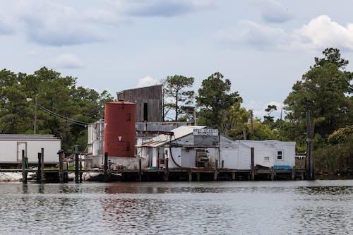 Gratis stockfoto met agbiopix, vis conservenfabriek, zeevoedsel