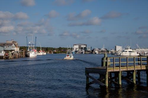 Gratis stockfoto met agbiopix, vis, vissen, wanchese